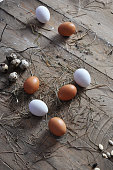goose egg, hen egg and a quail egg on a wooden background