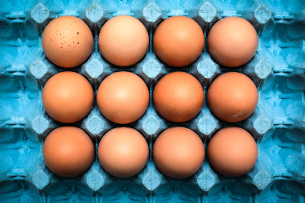 Eggs Fresh organic eggs in cardboard tray animal egg stock pictures, royalty-free photos & images