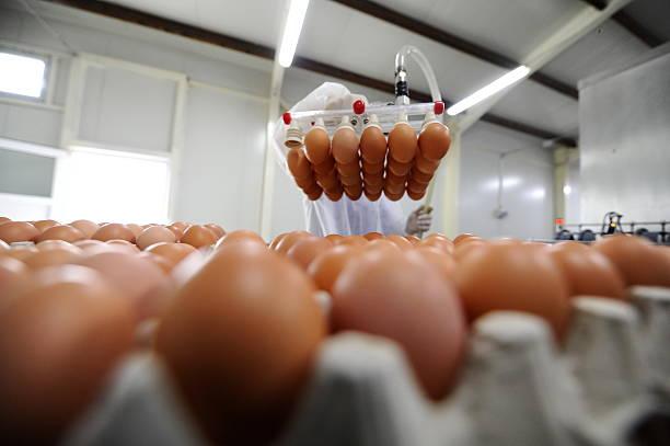 ei - nahrungsmittelfabrik stock-fotos und bilder