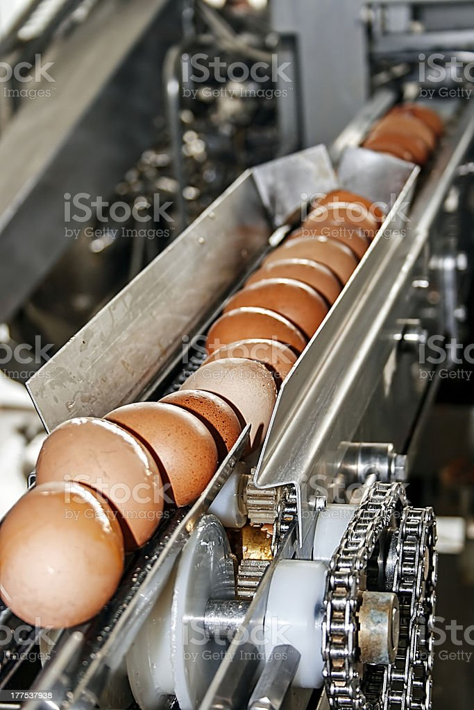 Eggs placed on the transmission line stock photo