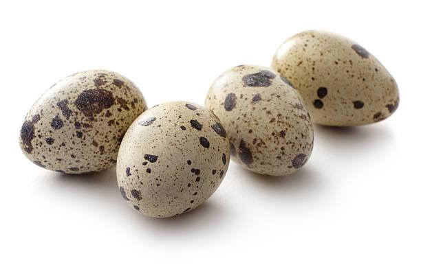 eier: quail egg - wachtelei stock-fotos und bilder