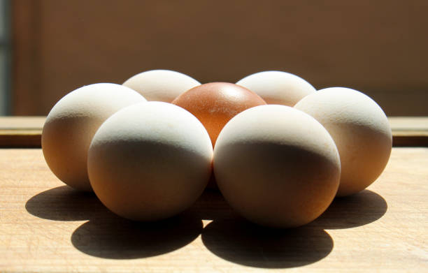 Eggs solo and in the group stock photo
