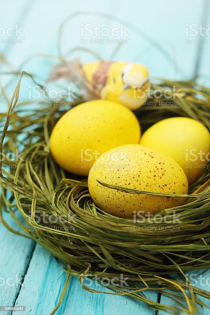 eggs with a bird Lizenzfreies stock-foto