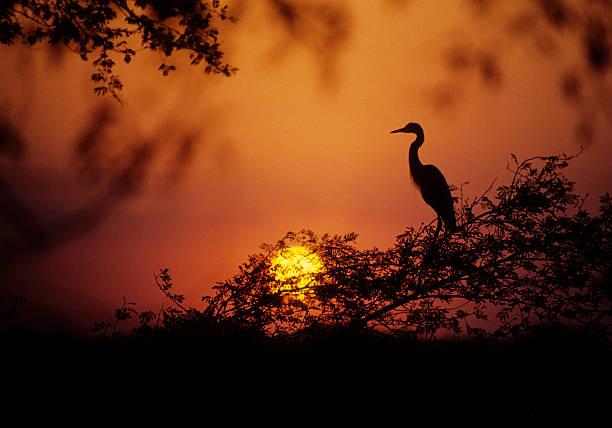 Egret at Dusk stock photo