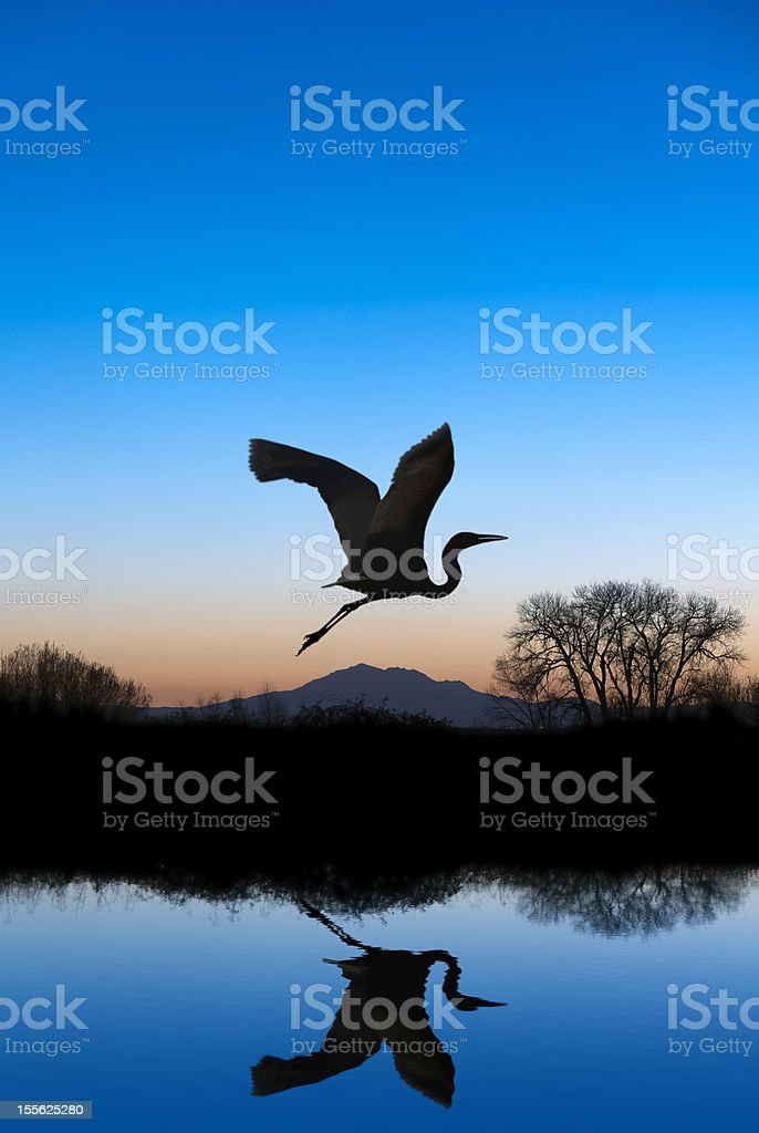 Egret Flying on Blue Evening royalty-free stock photo