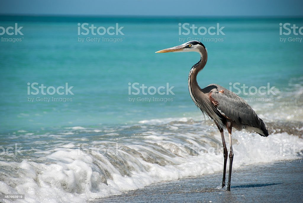 Egret in the surf stock photo