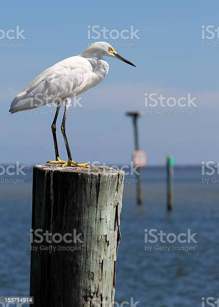 egret is perched on a post