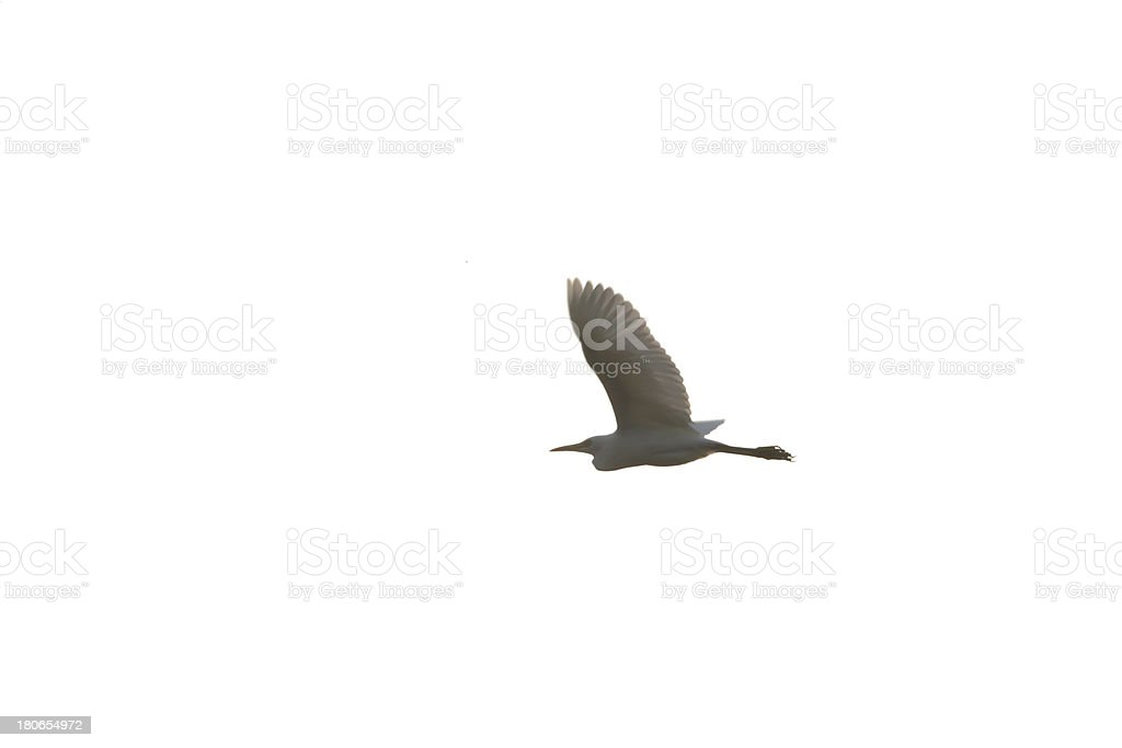 egret isolated on background royalty-free stock photo