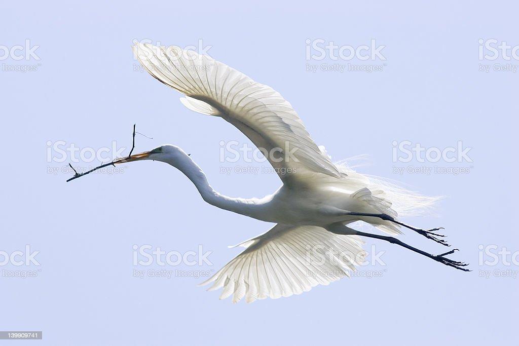 Egret - Royalty-free Animal Neck Stock Photo
