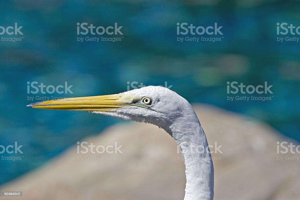 Egret royalty-free stock photo