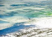 An Egret wades along the white coastal sand and colourful coral rich shoreline along the east coast beaches Zanzibar, Tanzania