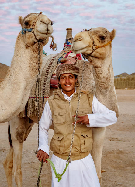 Egyptian boy with camels stock photo