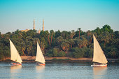 Egyptian felucca sailboats sail into the setting sun on the Nile River in Aswan Egypt