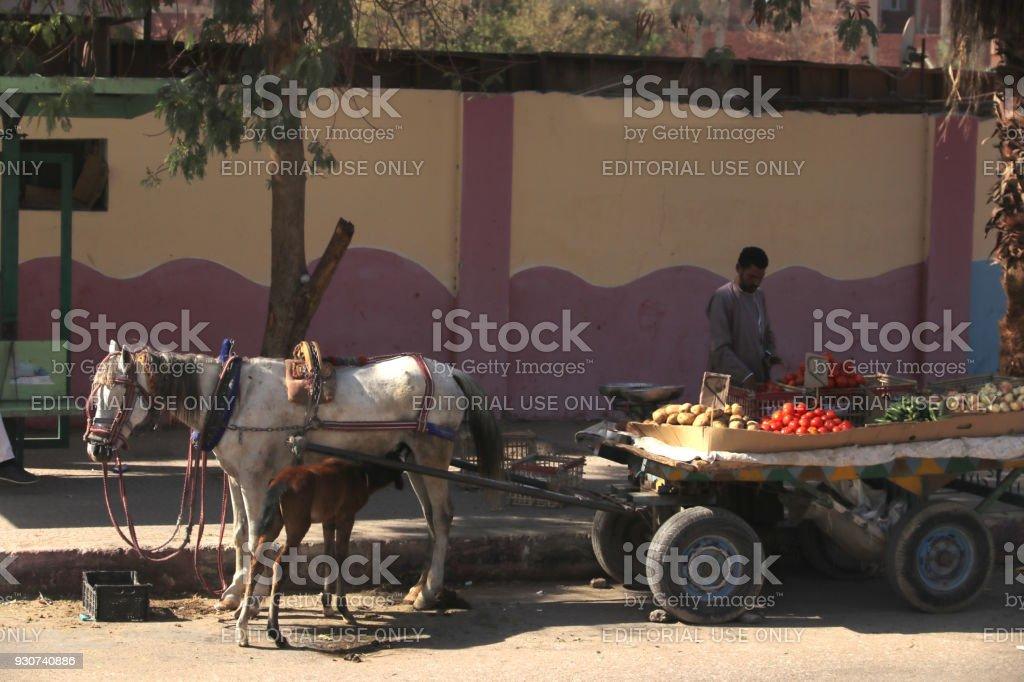 Egyptian man selling vegetable on the street of Aswan city, Egypt stock photo