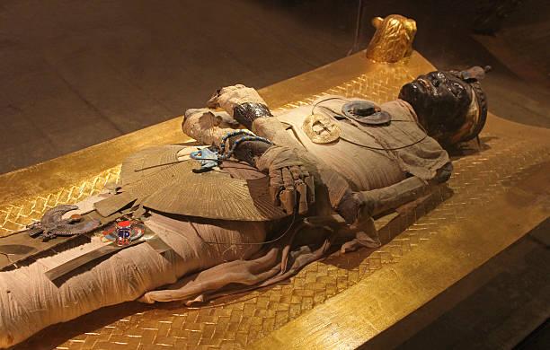 egyptian mummy - egyptisk kultur bildbanksfoton och bilder