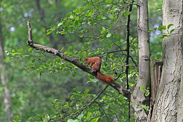 Eurasian sparrowhawk – Foto