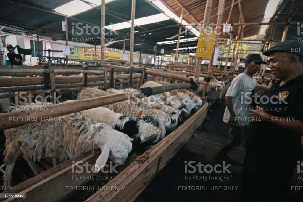 Eid Aladha Cattle Market Stock Photo - Download Image Now