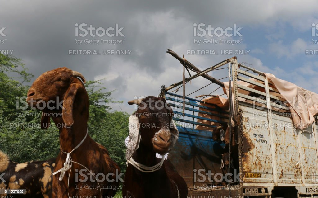 Eid al-Adha stock photo