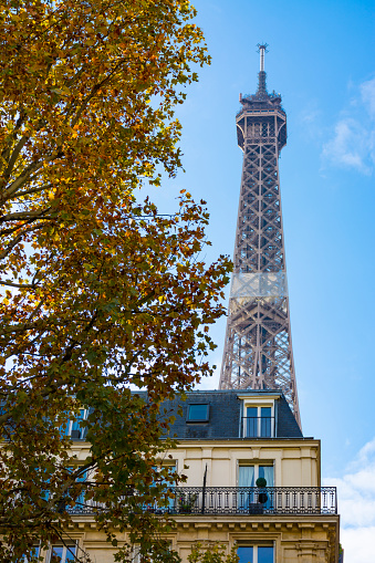 Paris, France - November 8, 2019: The Eiffel tower from Bourdonnais avenue. Long tree-lined avenue, full of neoclassical buildings, parallel to the Fields of Mars