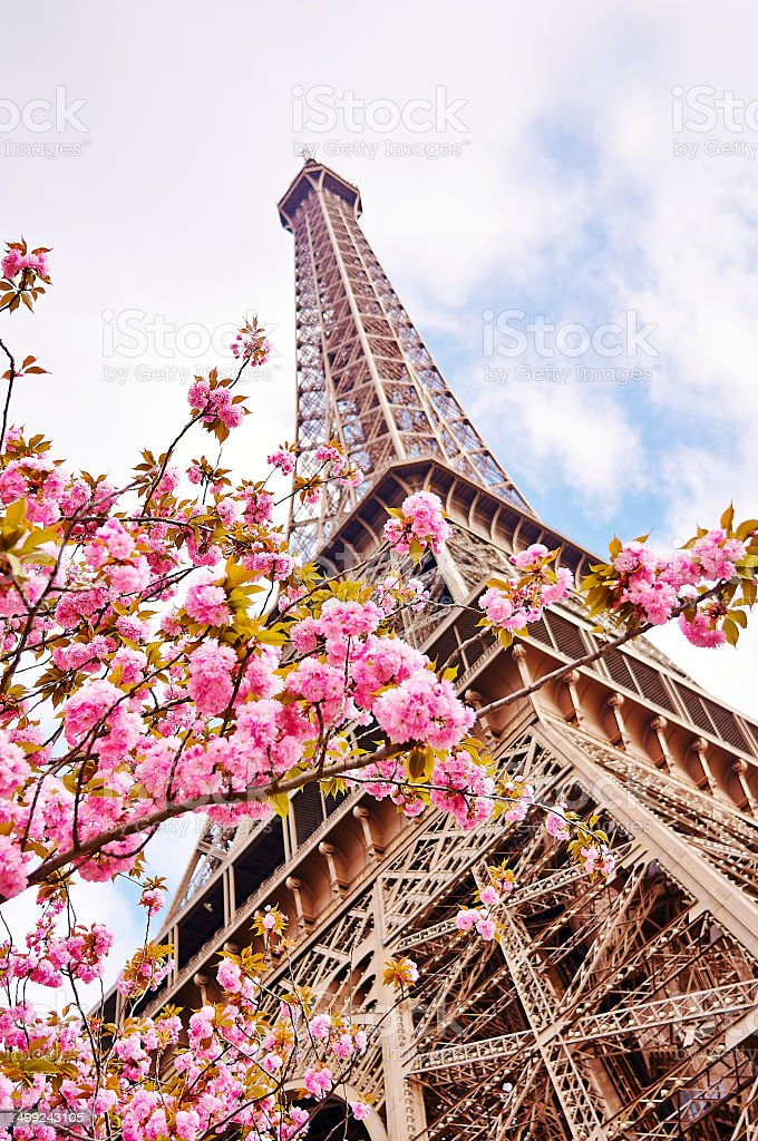 Eiffelturm in Paris mit den Frühlingsblüten – Foto
