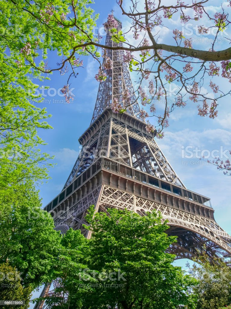 Eiffel Tower through the branches of flowering trees photo libre de droits