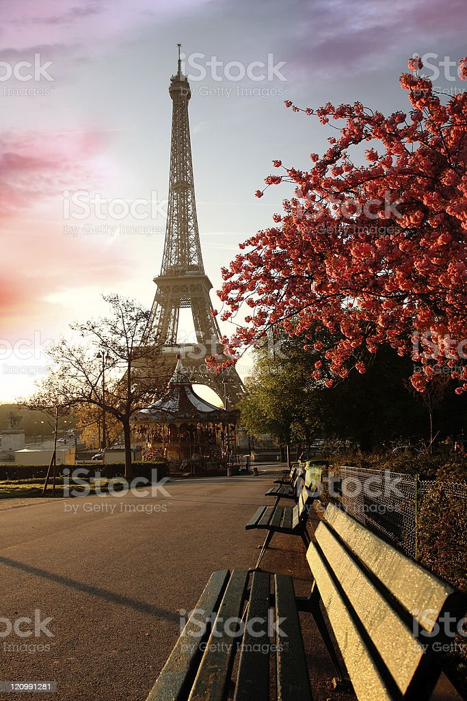 Eiffel Tower with blossomed tree, Paris stock photo