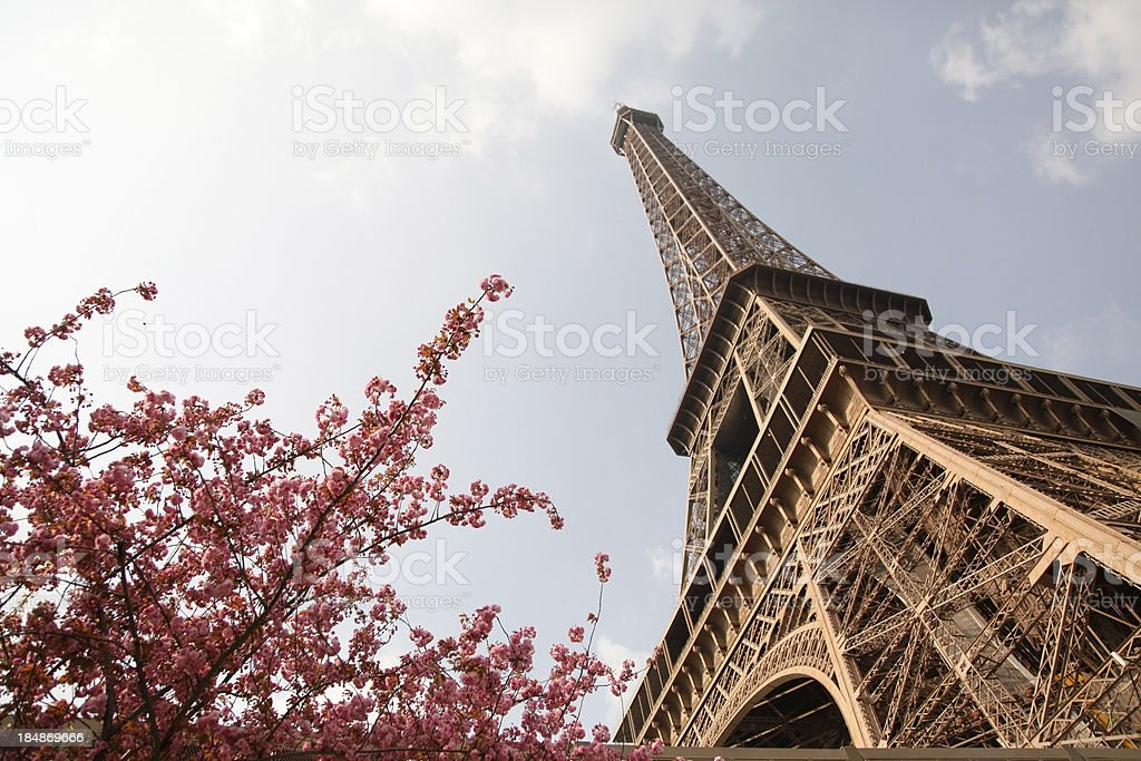 Eiffel Tower With Flowers royalty-free stock photo