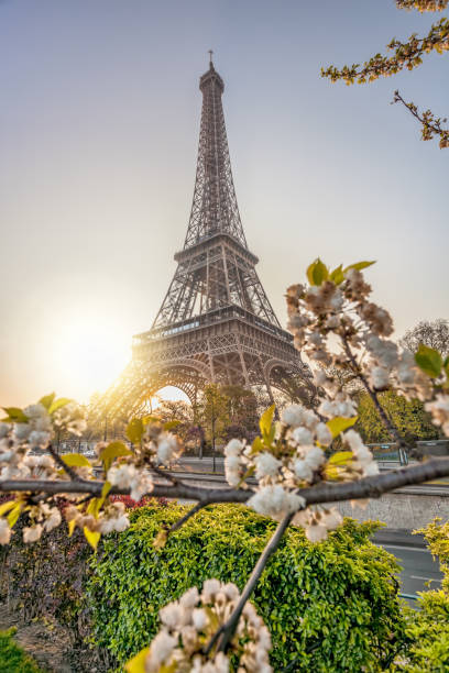 Eiffel Tower with spring trees against sunrise in Paris, France stock photo