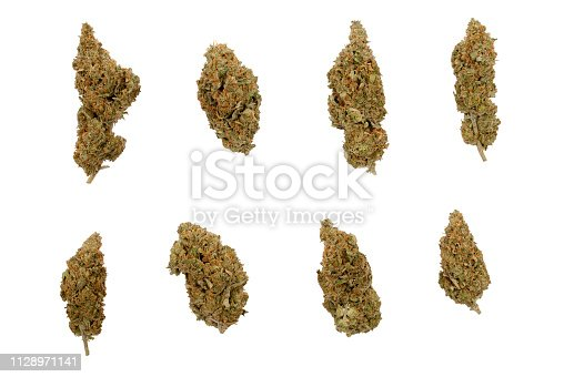 istock eight different shaped Cannabis sativa flower buds 1128971141