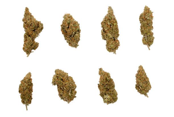 eight different shaped cannabis sativa flower buds - pączek etap rozwoju rośliny zdjęcia i obrazy z banku zdjęć