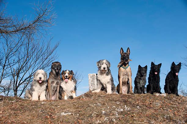 Eight dogs stock photo