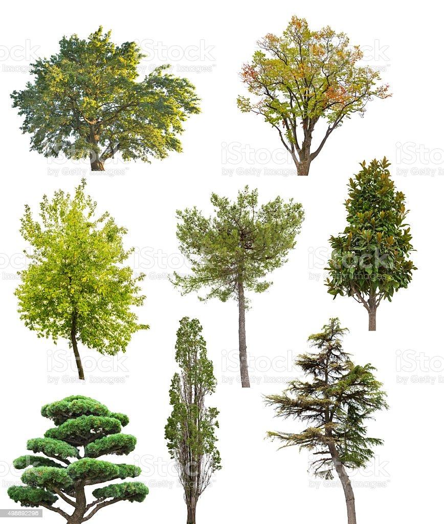 Acht isoliert Bäume Kollektion – Foto