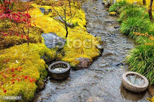 Eikando temple stone garden in Kyoto, Japan during early spring with yellow moss and green red foliage plants with small river and fallen cherry blossom petals