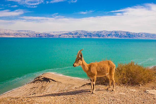 Ein Gedi nature reserve und national park – Foto