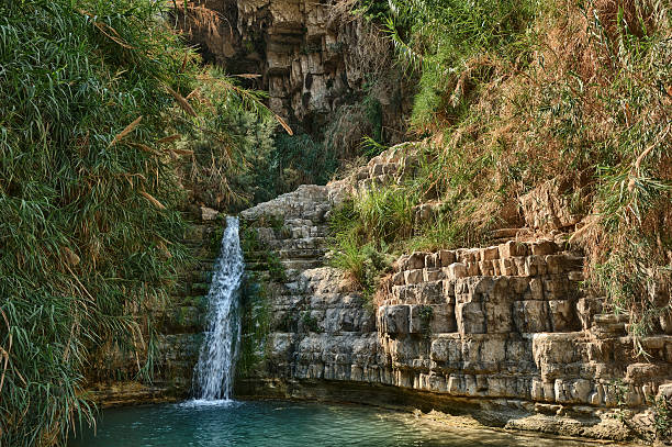 ein gedi nature reserve - nature reserve stock photos and pictures