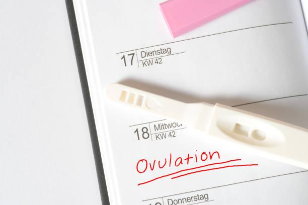 Ein Kalender und die Ovulation stock photo
