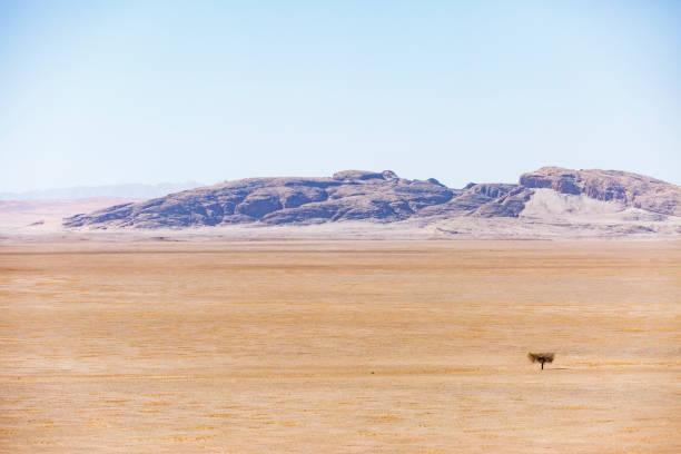 Einsamer Baum in der Steppe – Foto