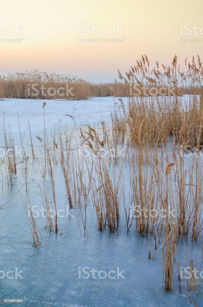Eis Und Schnee Zwischen Schilf Auf Dem Neusiedlersee – Foto