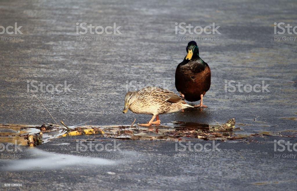 Eiszeit stock photo