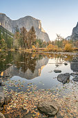 El Capitan reflection on river at Yosemite national park, USA in Autumn with yellow and orange leaves floating on water surface