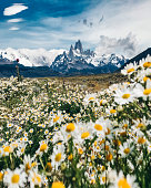 el chalten mountain with daisy