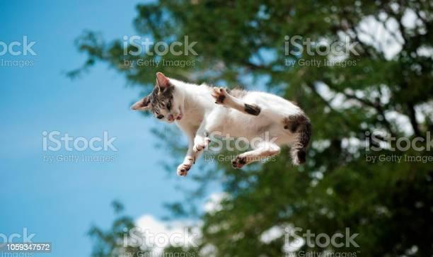 El gato volador picture id1059347572?b=1&k=6&m=1059347572&s=612x612&h=ipjczijrqtdzjlzsqibzvl 8ln2anr1etkckrssngec=