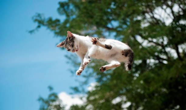 El gato volador gato en el aire scared cat stock pictures, royalty-free photos & images