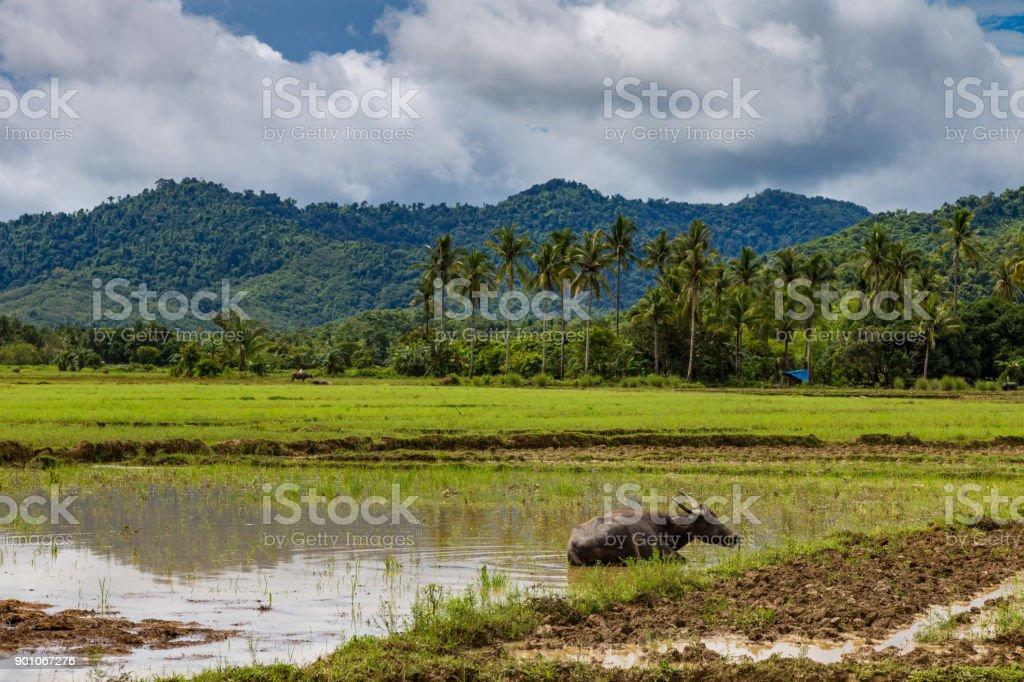 El Nido, Palawan, Philippines stock photo