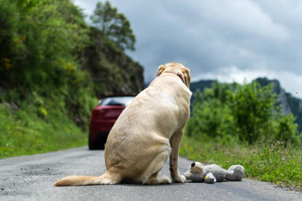 el nunca lo haría, no abandones a tu perro - dilapidated stock pictures, royalty-free photos & images