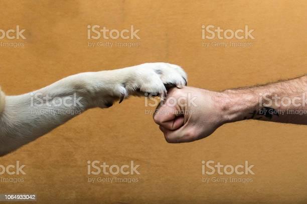 El pacto mas fuerte del mundo el perro y el hombre picture id1064933042?b=1&k=6&m=1064933042&s=612x612&h=c2zfo0sbrjeo6fxjujn6rt1cfdabfdbr6mydrm ssi4=
