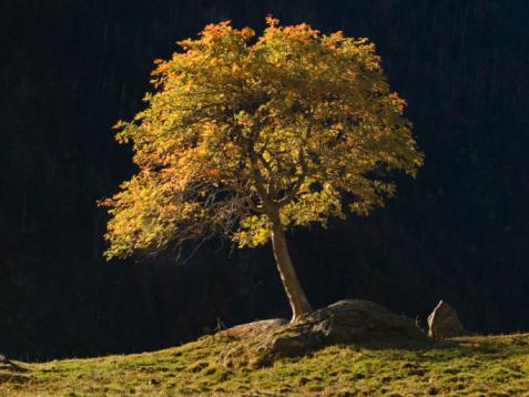 El árbol de la vida-The tree of life