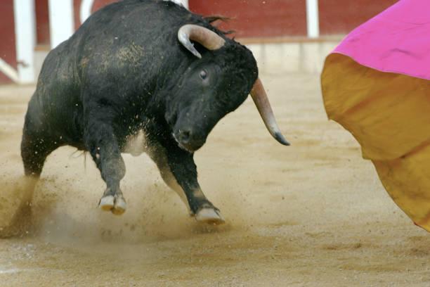 el toro stock photo