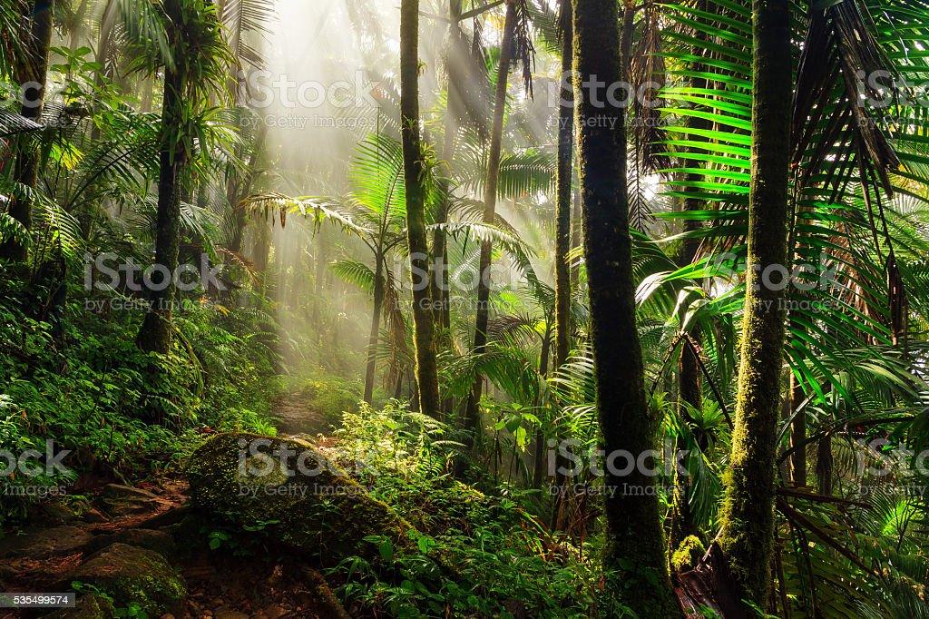 El Yunque morning light stock photo