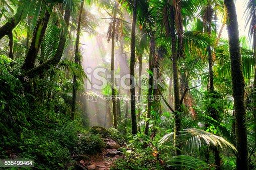 istock El Yunque morning mist 535499464